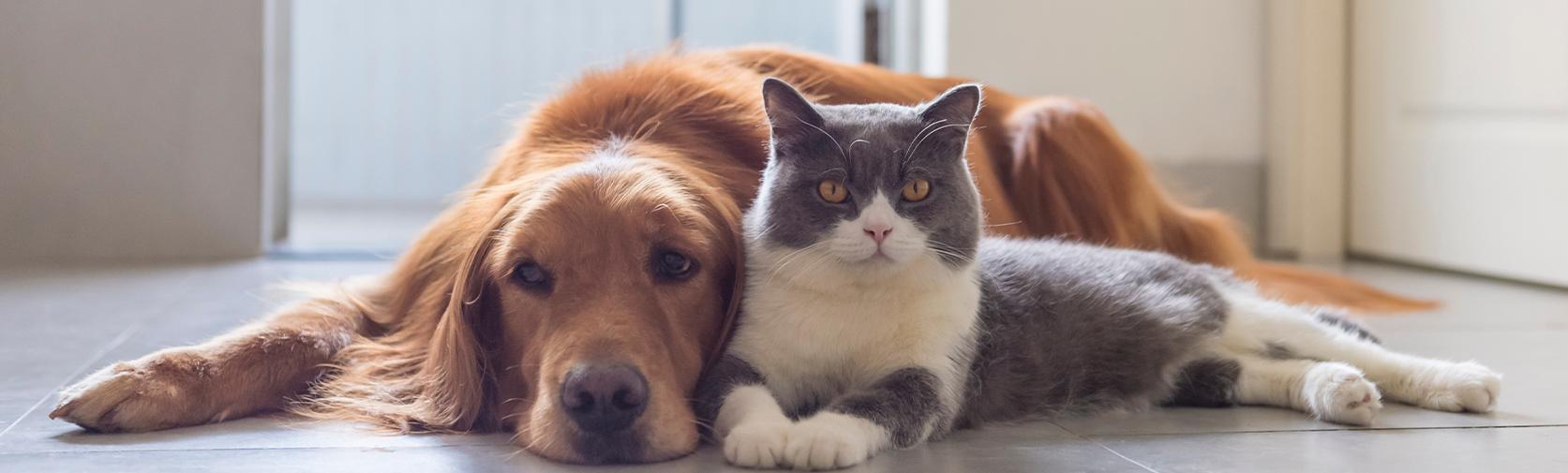 Vétérinaire à domicile  Euthanasie  Vétérinaire à Montréal